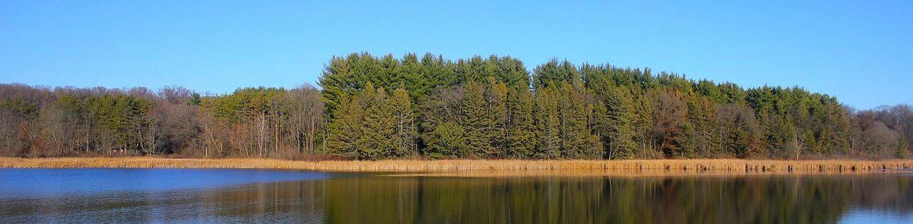 Skog och Ungdom